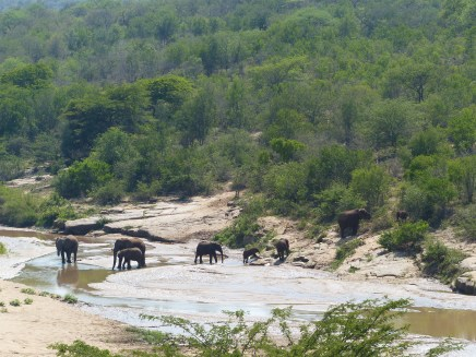 Elefanten Gruppe St.Lucia