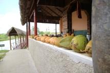 kokosnuesse
