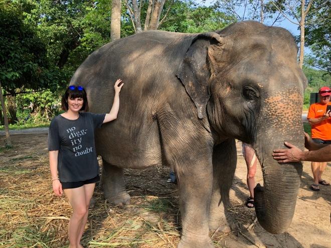 elephant31