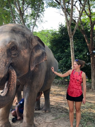 elephant36
