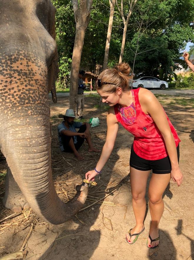 elephant39