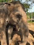 elephant40