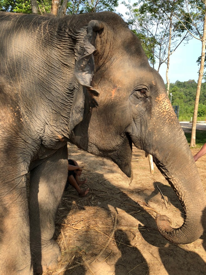 elephant41