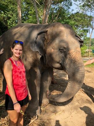 elephant43