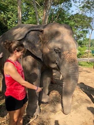 elephant45