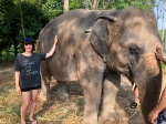elephant46