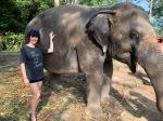 elephant48