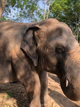elephant50